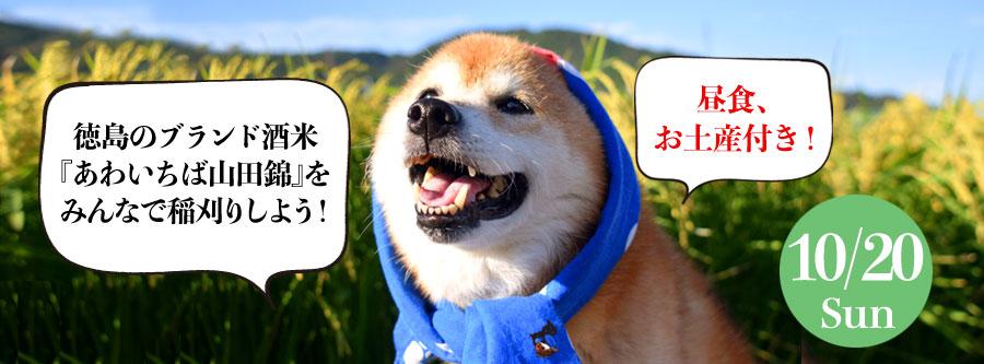 『あわいちば山田錦』稲刈り会