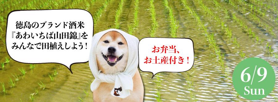 徳島のブランド酒米『あわいちば山田錦』をみんなで田植えしよう!